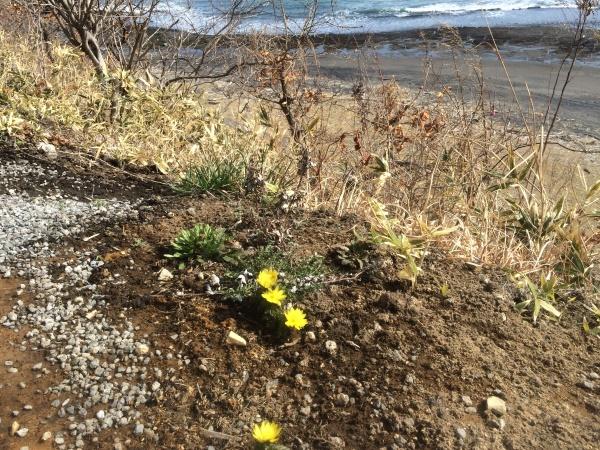 虎杖浜にも小さな春をみつけました