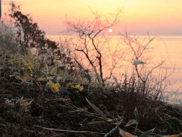 海の別邸から見える今日の朝日と春見つけた!~平成28年3月16日