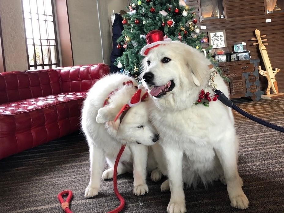 Merry Xmas その2