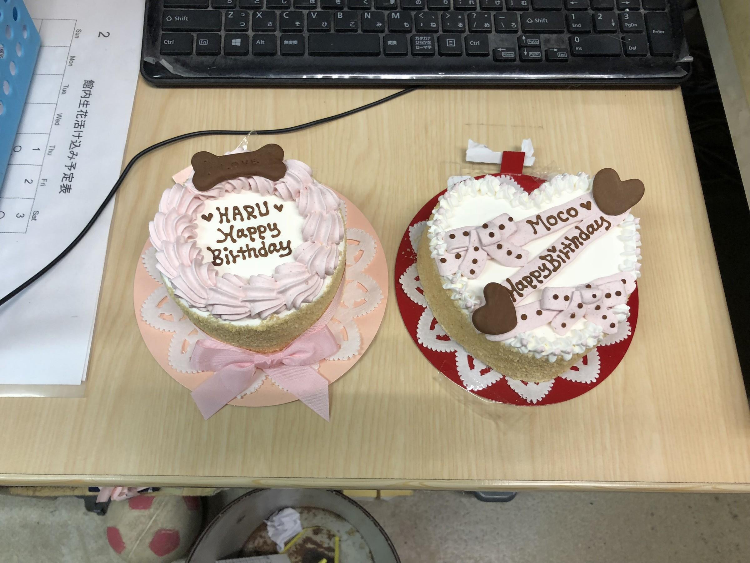 モコ&はるのお誕生日ケーキ到着♪